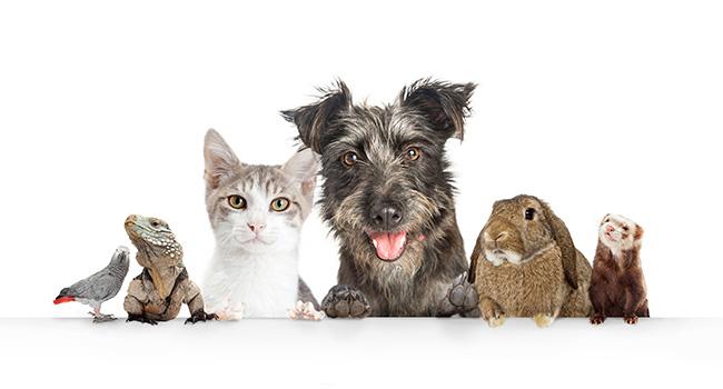 Friendly Pets   Pet-Friendly Furniture   Jordan's Furniture Life&Style Blog