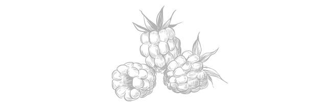 Berries drawing