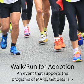 Walk for Adoption - Jordan's Furniture